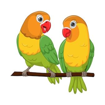Coppia carina piccioncini in piedi su un ramo di un albero
