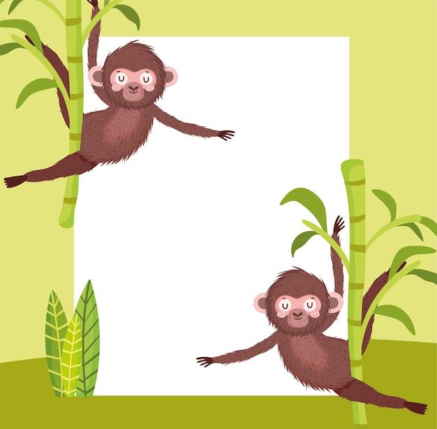 Scimmie carine e tavola vuota