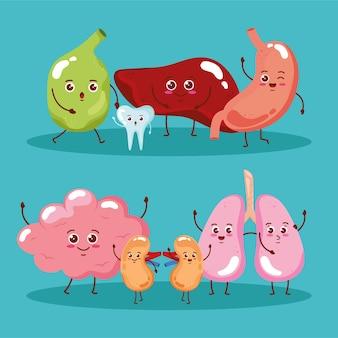 Carattere di esseri umani di organi carino