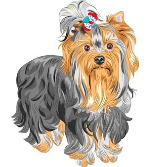 Simpatico cane di razza yorkshire terrier