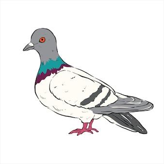 Simpatico piccione con disegno a mano o stile schizzo su sfondo bianco