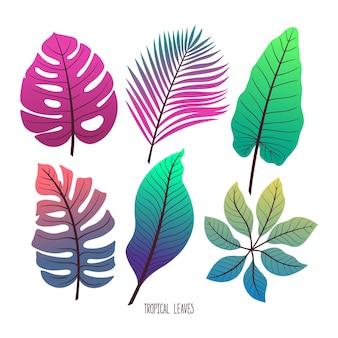 Insieme sveglio di diverse foglie tropicali verdi isolati su sfondo bianco