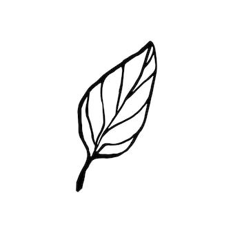 Simpatica foglia di limone disegnata a mano singola per menu o ricetta illustrazione vettoriale doodle fresco e gustoso