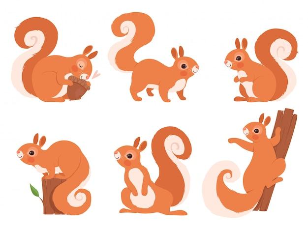Scoiattolo carino. zoo di piccoli animali della foresta in azione pone il personaggio dei cartoni animati di scoiattolo della fauna selvatica