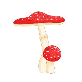 Illustrazione vettoriale carino di funghi su sfondo bianco.