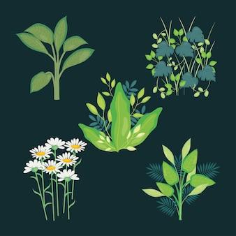 Daisy fiori e foglie verdi su sfondo nero, colorato, illustrazione