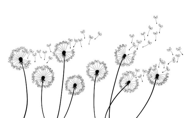 Priorità bassa del colpo di vento del dente di leone. sagoma nera con boccioli di tarassaco volanti su un bianco. semi volanti astratti. scenografia floreale.