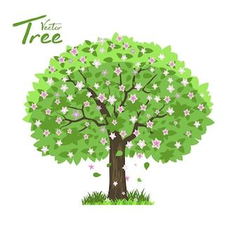 Albero deciduo in quattro stagioni: primavera, estate, autunno, inverno.