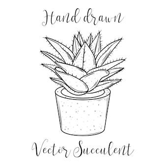 Pianta succulenta della decorazione in un vaso da fiori. illustrazione vettoriale disegnato a mano.