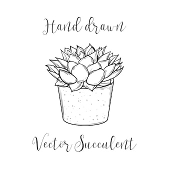 Decorazione pianta succulenta polyphilla in un vaso da fiori. illustrazione vettoriale disegnato a mano. aloe di cactus