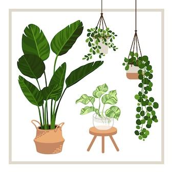 Casa decorativ collezione piante