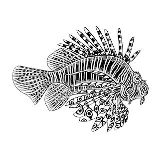 Zebra decorativa del pesce di corallo isolata su fondo bianco