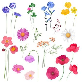 Set decorativo di fiori e piante selvatiche elementi di design per carte, inviti di nozze, ecc