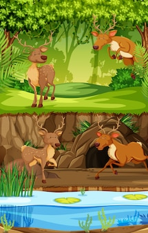 Cervo nella scena della natura