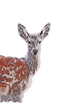 Disegno ad acquerello di cervo