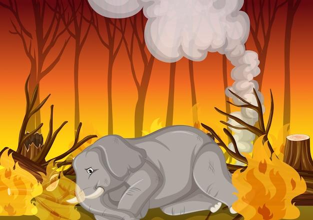 Scena di deforestazione con elefante in incendi