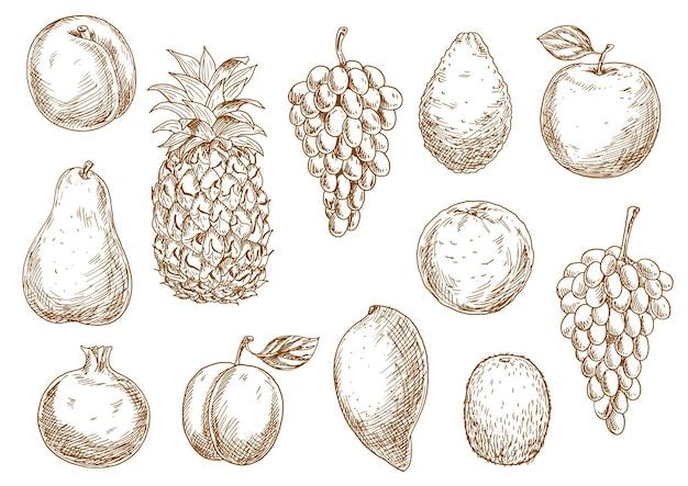 Delicati disegni di schizzo di uva