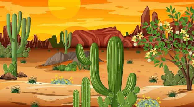 Paesaggio della foresta del deserto alla scena del tramonto con molti cactus