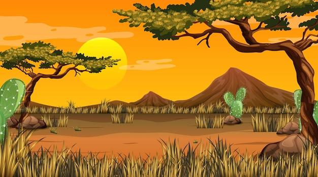 Paesaggio della foresta del deserto alla scena del tramonto