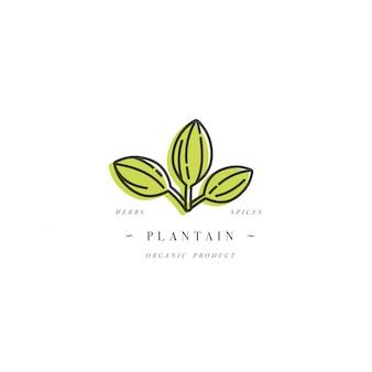 Modello di progettazione logo ed emblema sano erba-piantaggine. logo in stile lineare alla moda isolato.