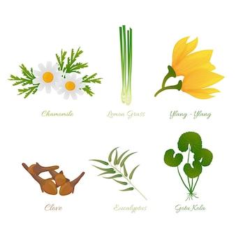 Set dettagliato di erbe di olio essenziale