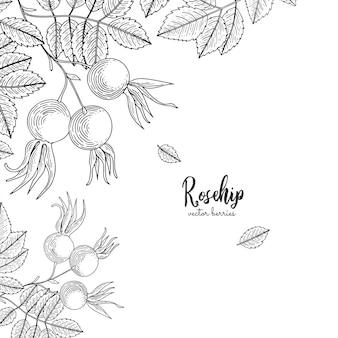 Cornice dettagliata con cinorrodo. illustrazione disegnata a mano isolata
