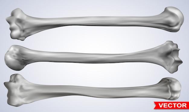 Set di ossa umane fotorealistiche grafiche dettagliate