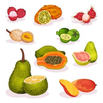 Insieme dettagliato di vari frutti esotici. nutrizione vegetariana. alimenti biologici e gustosi. mangiare sano