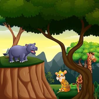 Diversi animali che vivono nella giungla