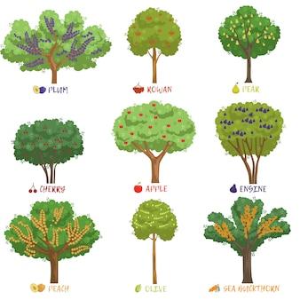 Diversi tipi di alberi da frutto con nomi impostati, alberi da giardino e cespugli di bacche illustrazioni su uno sfondo bianco