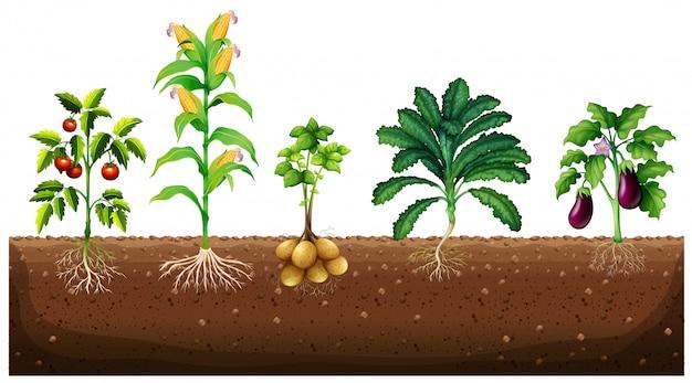 Diversi tipi di piante che crescono nel giardino
