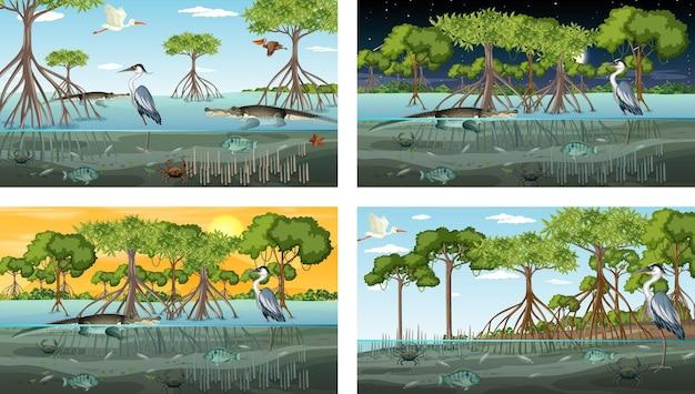Diverse scene di paesaggi di foreste di mangrovie con animali