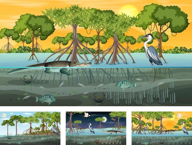 Diverse scene di paesaggi di foreste di mangrovie con vari animali