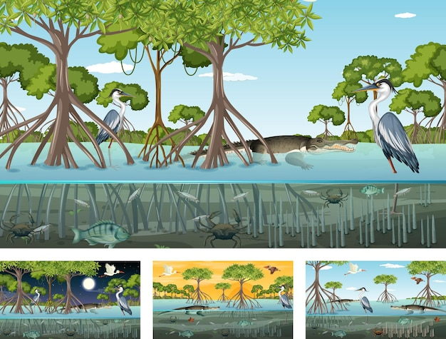 Diverse scene di paesaggi di foreste di mangrovie con vari animali Vettore Premium