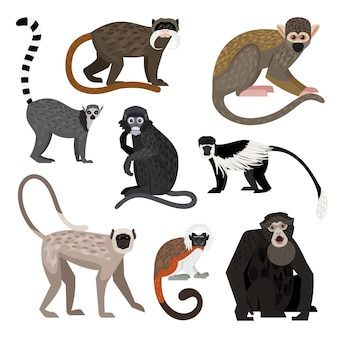 Insieme differente della scimmia. cartone animato primati della fauna selvatica, personaggi divertenti dello zoo, colobo lemure coda ad anello scimmia scoiattolo boliviano siamang imperatore tamarino scimmia foglia scura hanuman langur cotone top tamarino