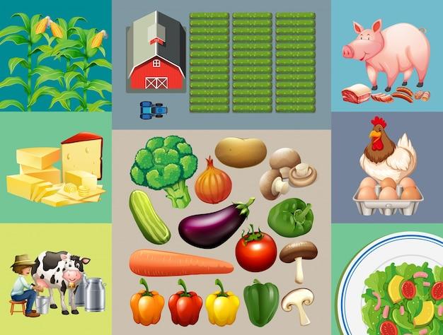 Diversi tipi di prodotti alimentari nella fattoria