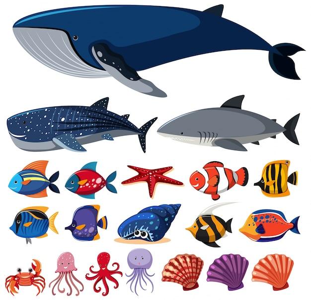 Diversi tipi di creature marine su sfondo bianco