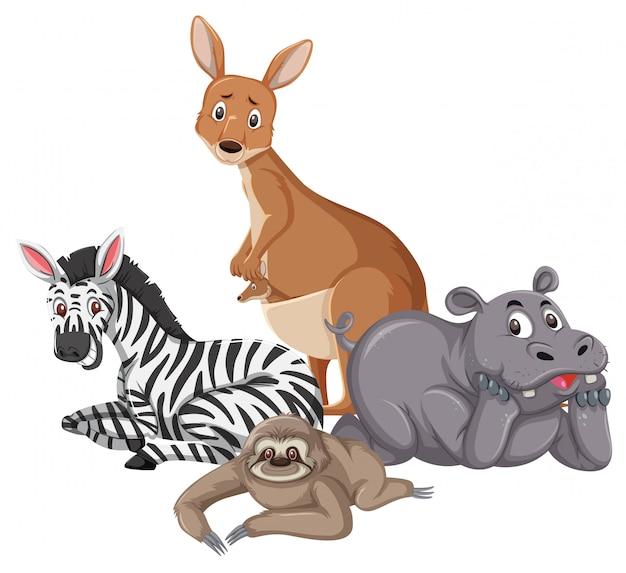 Diversi tipi di animali selvatici isolati