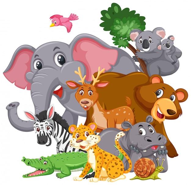 Diversi tipi di animali selvatici su sfondo bianco