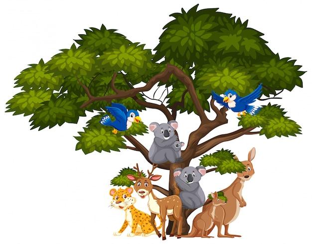 Diversi tipi di animali selvatici su bianco