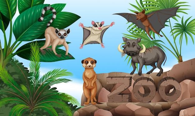 Diversi tipi di animali selvatici nello zoo