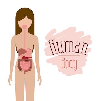 Sistema digestivo corpo umano