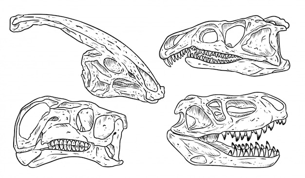 Insieme di immagine di schizzo disegnato a mano linea teschi di dinosauri. raccolta di immagini di fossili carnivori ed erbivori. illustrazione