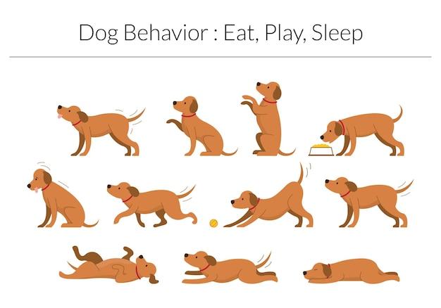 Set di comportamenti del cane isolato su bianco