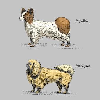 Razze canine incise, illustrazione disegnata a mano in stile xilografia gratta e vinci