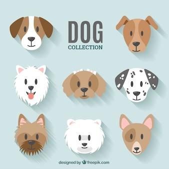 Design collezione dog