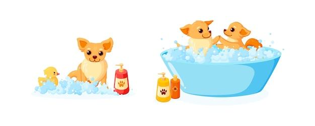 Toelettatura cani in vasca da bagno con paperella di gomma e shampoo set con chihuahua in schiuma di sapone