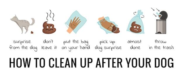 Insieme di infografica di passaggi di pulizia della cacca di cane