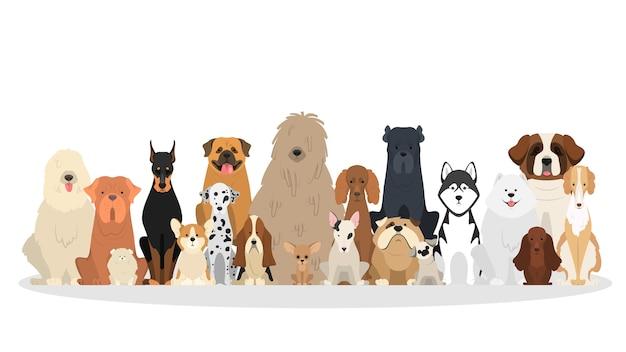 Set di cani. collezione di cani di varie razze