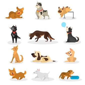 Set di cani. raccolta di animali da compagnia che svolgono attività diverse